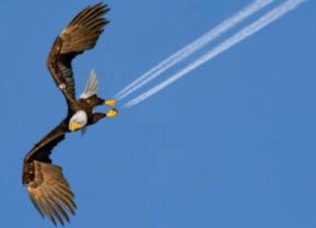 eagle.12.1